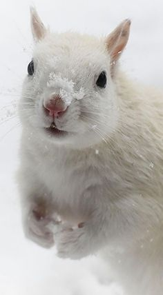 White Squirrel - A real stunner!