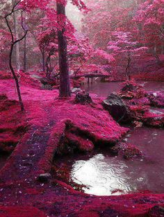 Pembe yosun bahçesi, Kyoto - Japonya