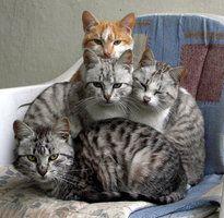 Cats by BojanMarinkoski