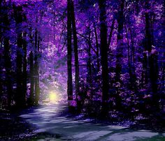Mysterious Woods  purple forest glow at end of path...