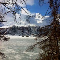 Silser See zwischen Sils Maria und Maloja
