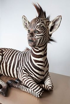 Kate Clark Title: She Gets What She Wants Medium: zebra hide, foam, clay, rubber eyes, thread, pins Size: 30 x 36 x 22 inches Year: 2013