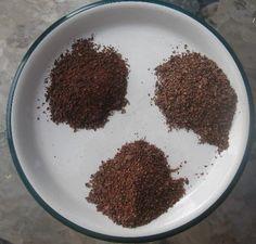 Brewing Cacao