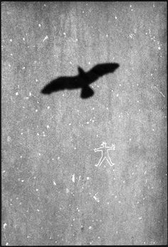 Image result for david gibson photography David Gibson, Black And White Photography, Street Photography, Monochrome, November, Bird, Pictures, Image, Black White Photography
