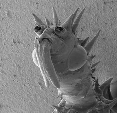 86 best things under microscope images electron microscope