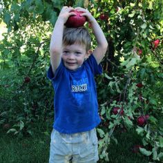 Before you get all MasterChef in the kitchen with store-bought varieties, head to one of these fun-filled orchard farms near D. to pick your own (with the help of the kids, of course). U Pick Apples, Fresh Apples, Vegetable Farming, Breakfast Specials, Apple Types, Apple Cider Donuts, Kettle Corn, Corn Maze, Apple Butter
