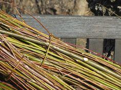 7 -[It] Fascina di salice - un dettaglio. [En] A fagot of willow - a detail.