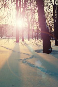 Beautiful winter picture!