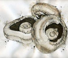 Mushroom Illustration Drawing | Flickr - Photo Sharing!