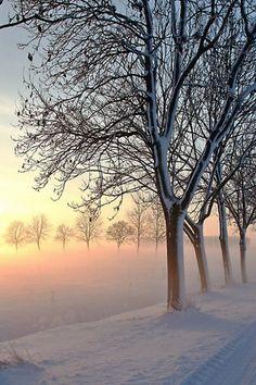 road, trees, winter, snow, light, morning, fog, awakening Wallpaper Apple WallpapeprsCraft