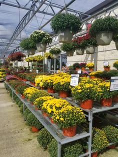 color blocking - Als Garden Center 2