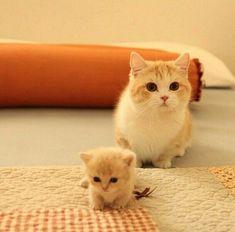 Mama cat and tiny baby kitten