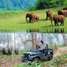 Wildlife Safari in Kerala will give you an outstanding experience of the forest's life. The rich biodiversity and spectacular flora and fauna of Kerala will provide a deep sense of resoluteness, and you will become conscious about the protection of natural beauty. The best wildlife safaris in Kerala are Muthanga Wildlife Sanctuary in Wayanad, Tholpetty Wildlife Sanctuary in Wayanad, and Parambikulam Tiger Reserve in the South Western Ghats in Palakkad District. Wildlife Safari, Flora And Fauna, Kerala, Natural Beauty, Deep, Nature, Animals, Animales, Animaux