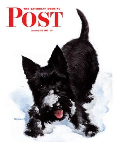 """""""Scottie in Snow,"""" Saturday Evening Post Cover, January 30, 1943    by W.W. Calvert"""