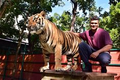 Thailand Tiger, Phuket Thailand, Family Adventure, Family Travel, Animals, Bodybuilder, Family Trips, Animales, Animaux