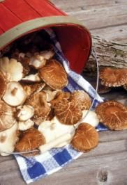 All About Mushrooms by Harvey Ussery Mother Earth News Aug./Sept. 2010