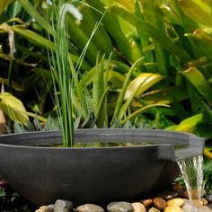 1000 Images About Container Fountains And Ponds On Pinterest Patio Pond Ponds And Whiskey