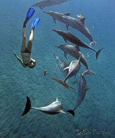 Dive and swim with dolphins...the day I do this, I'm pretty sure my life will be complete <3