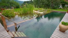 Alternatives to Chlorine Pools Love the water but hate the chemicals? There are more natural ways to build a pool using vegetation to keep the water clean. Natural swimming pools are popular in Europe. Shipping Container Swimming Pool, Natural Swimming Ponds, Natural Pond, Au Natural, Pool Chlorine, Dream Pools, Swimming Pool Designs, Swimming Pool Pond, Swimming Holes