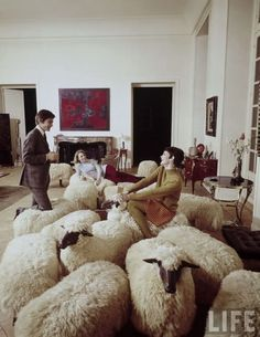I need this for my Australian Shepherd//Les amis house - A flock of sheep: Hans-Peter Krafft and François-Xavier Lalanne