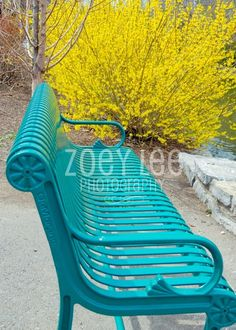 http://zoeyleephoto.com/    Love this bench!!! Great with the yellow bush!
