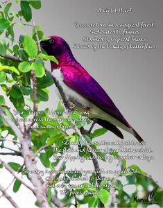 follow marcelink on instagram and facebook for more soultouching words Enchanted Fairies, Magical Forest, Tropical Fruits, My Poetry, Songs, Bird, Facebook, Animals, Instagram