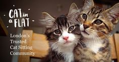 The best way to find a trusted cat-loving sitter in your area. Join the cat loving community today.