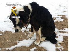 Investigado un vecino de Santiago-Pontones por maltrato animal