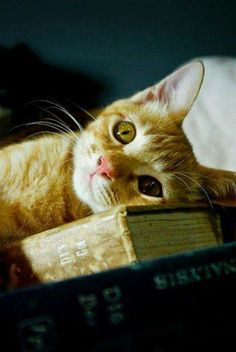Can't... Read... Any... More...