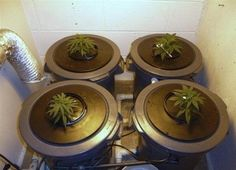 """Aeroponics make a very impressive cultivation system. Hydroponic Nutrient Solution, Hydroponics System, Medical Marijuana, Grow Cabinet, Growing Marijuana Indoor, Grow Room, Grow Tent, Ganja, Gardens"