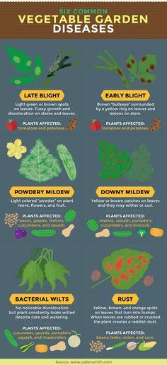 vegetable garden diseases