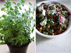 Salat og frisk oregano
