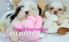 BANHO EM FILHOTES (TUTORIAL) - YouTube