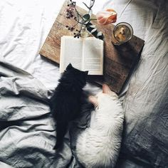 Photo | Tea, Coffee, and Books | Bloglovin'