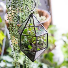 Hanging Cone Shape Glass Geometric Terrarium Planter for Succulents Cacti Miniature