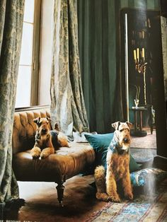 Old Ralph Lauren home ad with Airedales