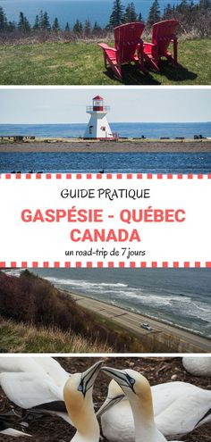 Road trip in Quebec: Tour of Gaspésie in 7 days – Travel World Voyage Usa, Blog Voyage, Business Trip Packing, Packing Tips For Travel, North America Destinations, Travel Destinations, Alberta Canada, Canada Travel, Travel Usa