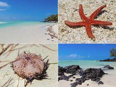 Ile aux Cerfs, Mauritius. Dara Rakovcik Travelblog : Mauritius 2013.
