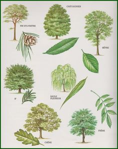 germination google search nature pinterest. Black Bedroom Furniture Sets. Home Design Ideas