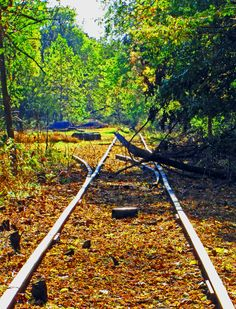 Abandoned Rails|Love's Photo Album