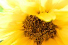 Garden flowers - Extreme closeup - 428