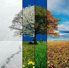 4 seasons in one image Seasons In The Sun, Four Seasons, Landscape Photography, Art Photography, Piano, Tumblr Image, One Image, Buddhism, Oeuvre D'art