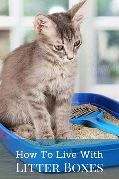 What do you do to ensure your cats' litter boxes don't threaten your sanity?  Find out how to live with a litter box in your home and not go insane!