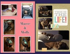 HAPPY TAILS AT HOME - Gigi sent us a bunch of super adorable photos of Molly with her human and canine siblings!
