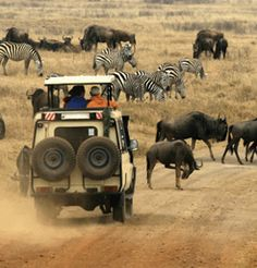 No other destination offers such a spectacular combination of scenery, cities, and amazing wildlife sightings. On our tour to South Africa, discover the wild savannah, the breeze off the Indian Ocean and more. Kruger National Park, National Parks, African Museum, Mount Kenya, British Colonial Style, Cruise Excursions, Wildlife Safari, Out Of Africa, Travel Tours