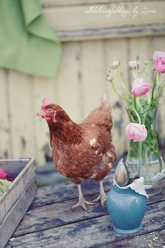 I want this chicken in my backyard