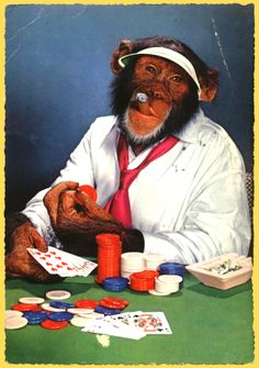 aan de pokertafel met sigaar Foto Text, Monkey Art, Monkey Business, Monkeys, Funny Things, Meme, Painting, Animals, Random