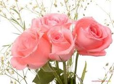 <3 More Pink Roses For You <3
