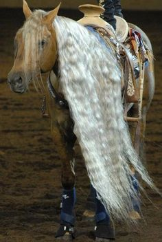 Palomino quarter horse with a really, really long mane! Palomino, Appaloosa, All The Pretty Horses, Beautiful Horses, Animals Beautiful, Clydesdale, Horse Photos, Horse Pictures, Mustang