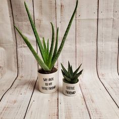 White Plants, Small Plants, Potted Plants, Succulent Pots, Plant Pots, Common Garden Plants, Plant Aesthetic, Painted Flower Pots, Self Watering Planter